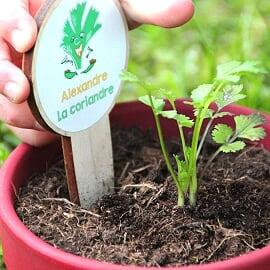 Les petits radis – Le kit des herbes aromatiques BIO pour enfants